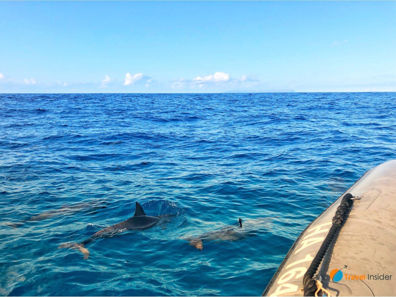 Delfine auf dem Weg zur Na Pali Coast
