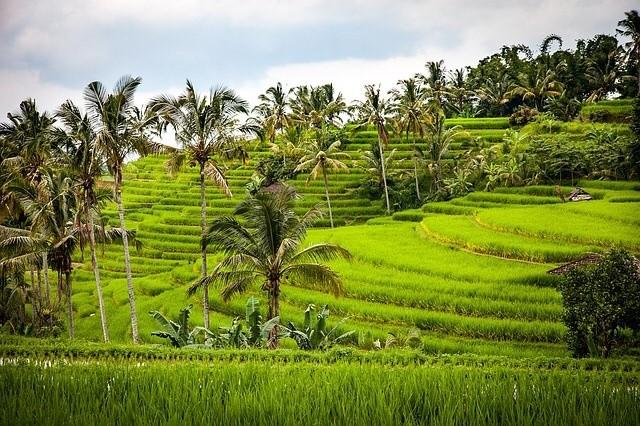 In der Business Class für 1.664 Euro nach Bali