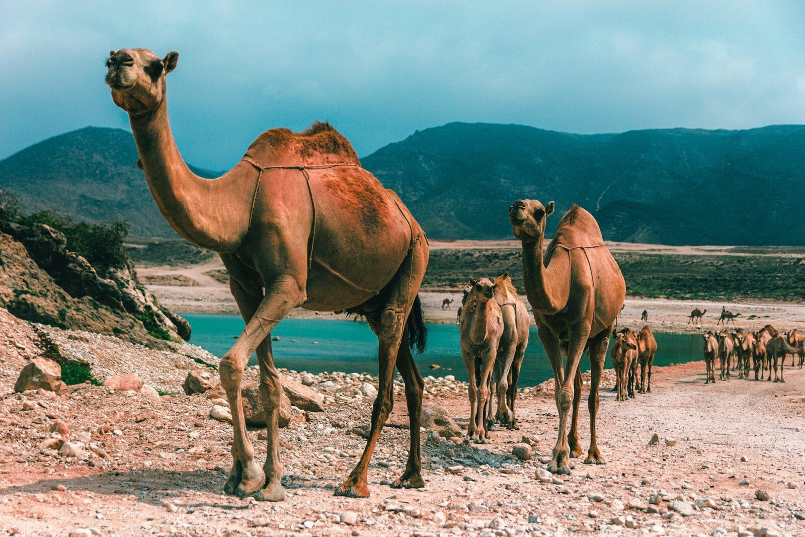 In der SWISS Business Class in den Oman nur 979€
